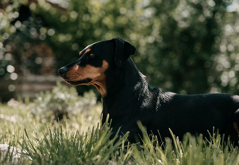 Hundepflege aus Österreich - CANELO